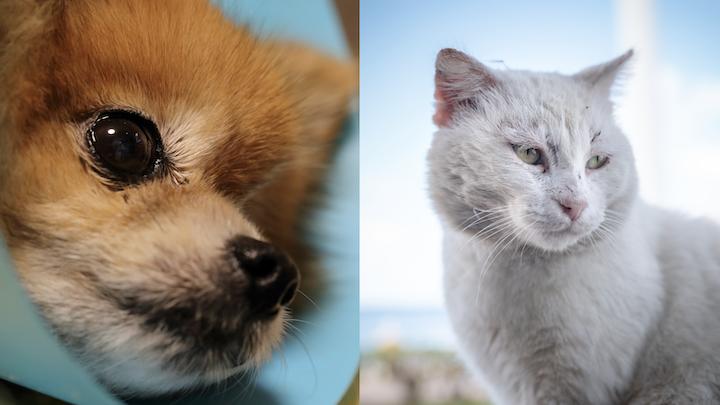 imagen de un perro y un gato